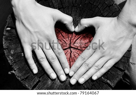 Heart shape in the wood - stock photo