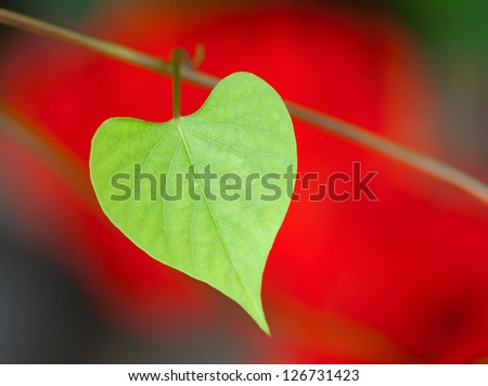 Heart shape leaf with a red flower in the background - stock photo