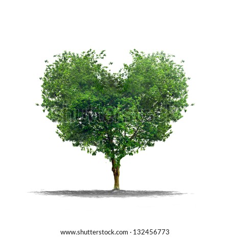 Heart shape tree over a white background - Love and nature concept - stock photo