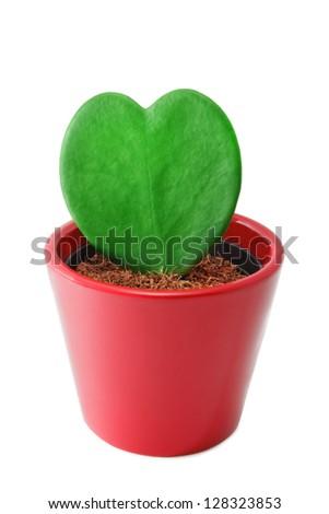 Heart shaped cactus - stock photo