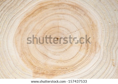 heartwood texture background - stock photo