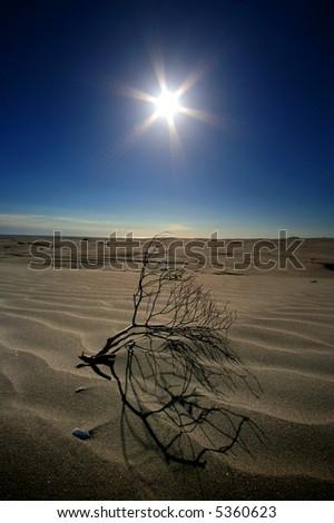 Heat In The Desert Dunes - stock photo