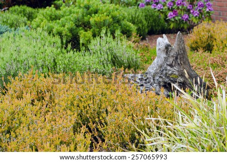 Heather garden with tree trunk and rhodondendron - stock photo