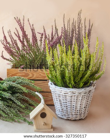 Heathers different colors on a brown background - stock photo