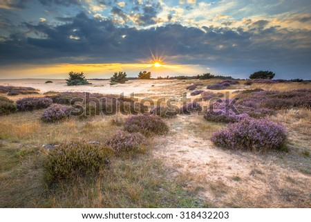 Heathland and shifting sands in national park de Hoge Veluwe around sunset under a clouded sky in August - stock photo