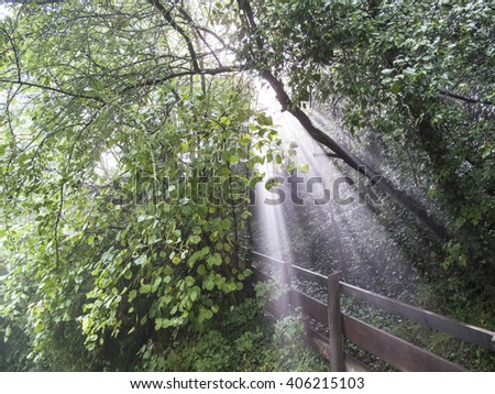 Heavy rain and sun breaking trough leaves of a forrest and producing fog and sunbeams. - stock photo
