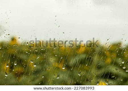 heavy rain drops on window with sunflower in the background - stock photo