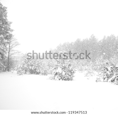 heavy snowfall in the forest - stock photo