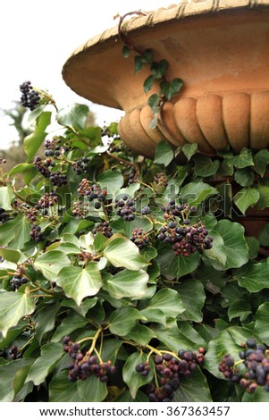 Hedera ivy climbing up the pillars of the old staircase railing at the castle courtyard - stock photo