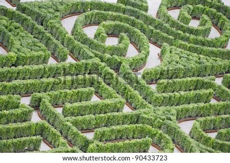 Hedge labyrinth - stock photo