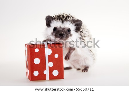 Hedgehog christmas - stock photo