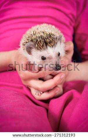 Hedgehog in hand - stock photo