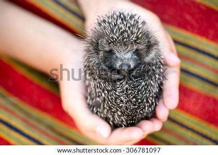Hedgehog in the hands of the boy against a bright background - stock photo
