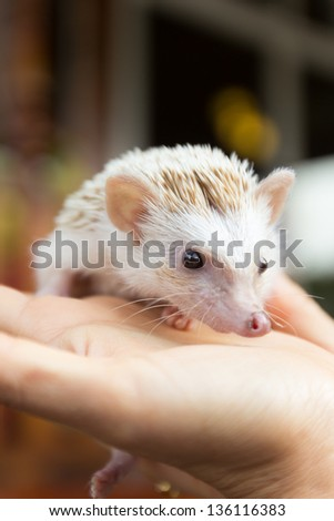 hedgehog is on a hand - stock photo