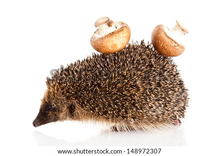 hedgehog on a white background. Hedgehog with mushroom - stock photo