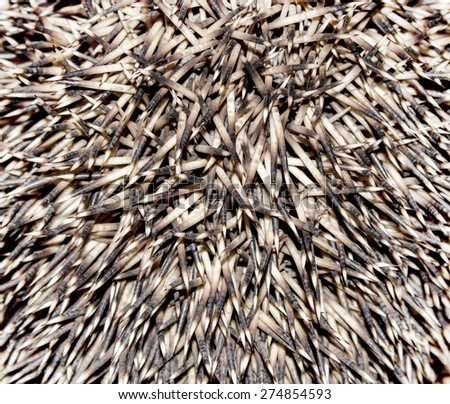 Hedgehog's spines background - stock photo