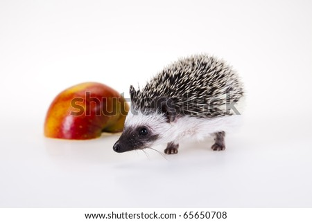 Hedgehog with apple - stock photo