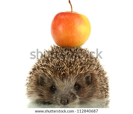 Hedgehog with apple, isolated on white - stock photo