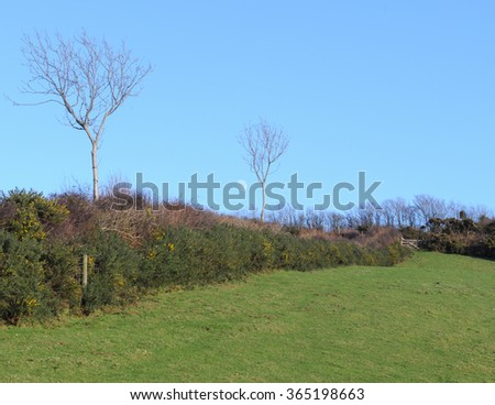 Hedgerow of Gorse and Hazel Tree and the Moon in the Background around the Rural Village of Martinhoe within Exmoor National Park in Devon, England, UK - stock photo