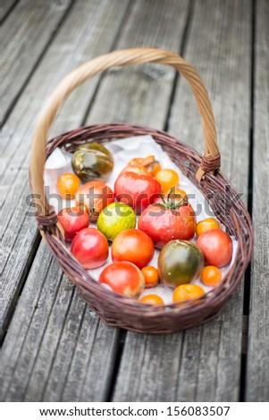 Heirloom tomatoes  in a basket on wood floor - stock photo