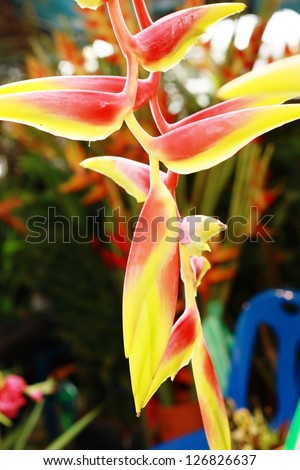 Heliconia flower - stock photo