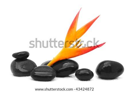heliconia flower and zen stones - stock photo