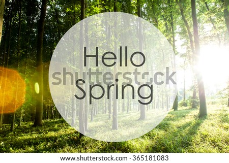 hello spring, sunset in the woods - stock photo