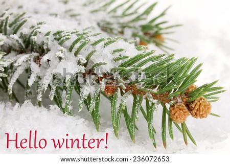 Hello Winter, greeting card - stock photo