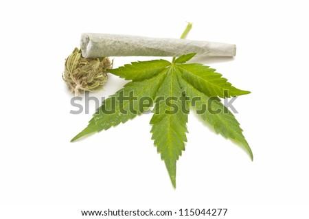 Hemp (cannabis) - stock photo