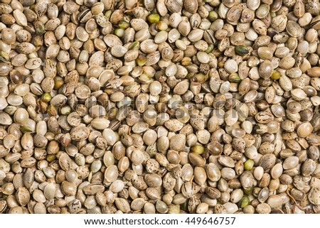 hemp - cannabis seeds  - stock photo