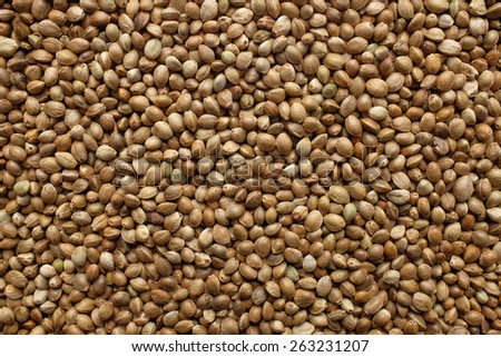 Hemp seeds as an abstract background texture - stock photo