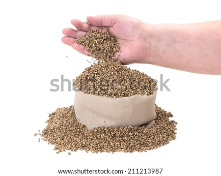 Hemp seeds poured in to a bag by woman hands - stock photo