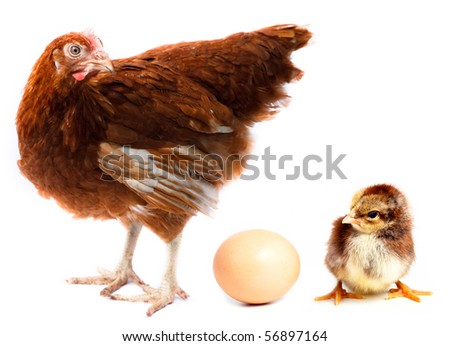 Hen, chick and egg in studio against a white background. - stock photo