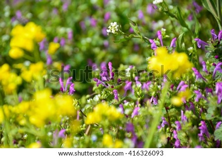 Henbit flowers and dandelion flowers - stock photo