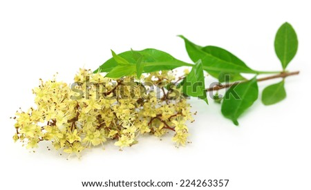 Henna flower with leeaves over white background - stock photo