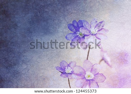 Hepatica flowers on grunge paper background,vintage style with copy space - stock photo