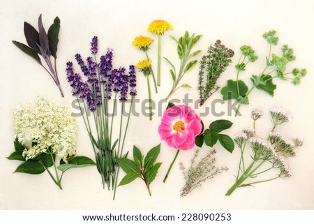 Herb and flower selection used in alternative medicine over mottled cream background. - stock photo