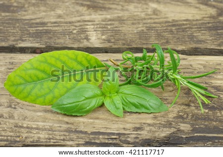 herb basi rosemary and laurel on wooden background - stock photo