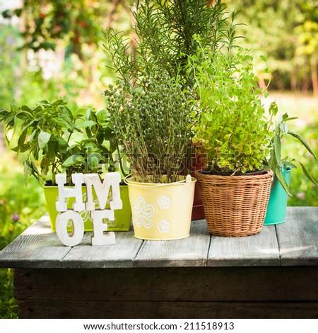 Herb garden - stock photo