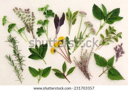 Herb leaf and flower selection for medicinal and culinary use over mottled cream background. - stock photo