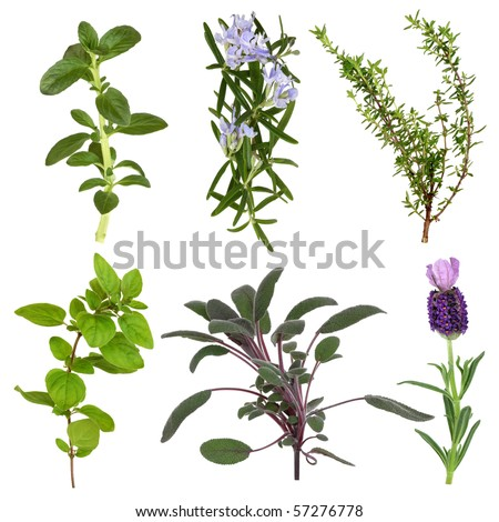 Herb leaf collection of mint, rosemary, thyme, oregano, sage, and lavender flower, isolated over white background. - stock photo