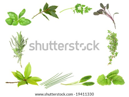 Herb leaf selection forming a border of fresh  bay, lavender, basil, dark bay, coriander, purple sage, thyme, lemon balm, variegated sage and  chives. Over white background. - stock photo