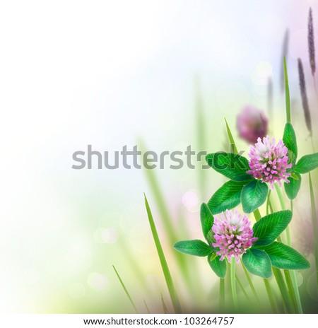 Herbal Border isolated on white - stock photo
