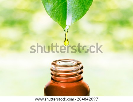 Herbal essence. Alternative healthy medicine. Skin care. Essential oil or water dropping from fresh leaf to the bottle.  - stock photo