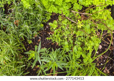 Herbal garden in close up with oregano, rosemary, parsley, tarragon, chives - stock photo