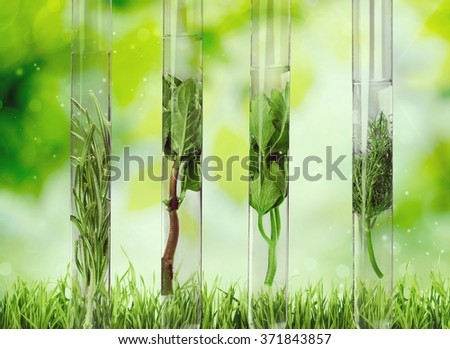 Herbal in test tubes. - stock photo