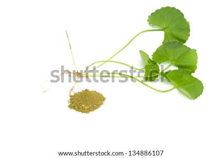 Herbal medicine from Centella asiatica - stock photo