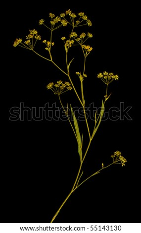 Herbarium isolated on black background - stock photo