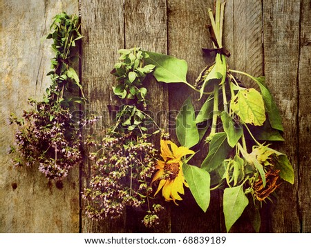 Herbs and sunflowers hung to dry against a rustic barn board background.  Grunge textured. - stock photo