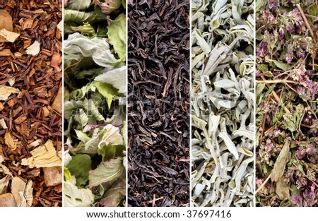 Herbs and tea collection - stock photo